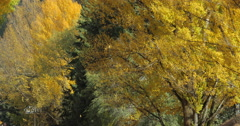 Falling leaves in autumn Stock Footage