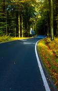 Autumn scene with road in forest, Autumn landscape with road and beautiful co Stock Photos