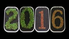 Time-lapse of growing New Year 2016 in RGB + ALPHA matte format (720p) Stock Footage