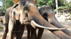 Elephant feeding in a zoo. Stock Footage