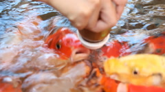 CARP with a bottle of milk. Stock Footage