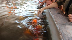 People feeding carp fish with a bottle of milk. Stock Footage