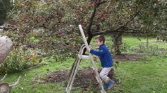 Little preschooler boy, helping with gathering and harvesting apples from app - stock footage