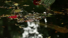 View of leaves on an Asian pond with clump of small leaves Stock Footage