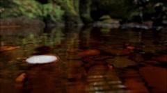 Scottish Countryside Hidden River filmed at Devil's Pulpit, Finnich Glen Stock Footage