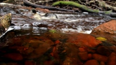 Gentle River Rapids beside Devil's Pulpit filmed at Finnich Glen Stock Footage