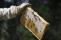 Cropped hand of beekeeper holding honeycomb at farm Stock Photos