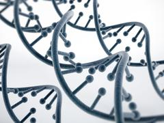 DNA strands isolated on white - stock illustration