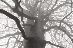 Spooky tree branches Stock Photos