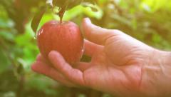 Hand picking apple from the branch Stock Footage