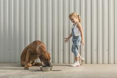 Happy girl looking at dog feeding in container against corrugated wall Stock Photos