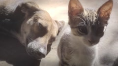Friendship between cat and dog Stock Footage