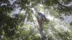Teenager climbing on treetop Stock Footage