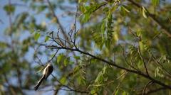 Birdie jumping on a tree Stock Footage