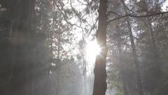 Tree amongst smoke with sun and lens flare Stock Footage