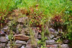 Way of Saint James slate stone in Galicia - stock photo