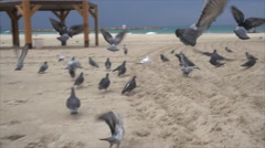 Gray pigeons fly off in slow motion Stock Footage