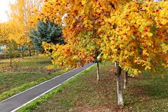 Sorbus tree in autumn season in park - stock photo