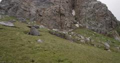 Wide Angle Tilt Up of Birds Nesting on Mountain Peak Stock Footage