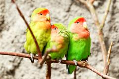 Three Green Parrots Stock Photos