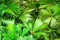 Green Amazonia Theme Stock Photos