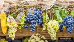 Grapes Diversity For Autumn Festival Stock Photos