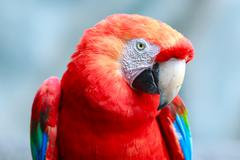 Stock Photo of Ara Macaw Parrot Bird Against Blue Sky
