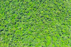 Stock Photo of Andean Rainforest Aerial Shot