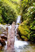 Stock Photo of Rain Forest Waterfall