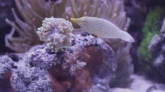 Reef Aquarium - stock footage