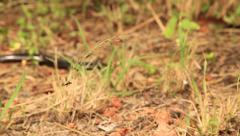 Snake moving off OUT OF FOCUS Stock Footage