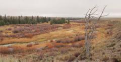 Autumn nature field in Grand Teton Stock Footage