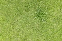 Topview Green grass on the field - stock photo
