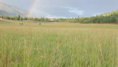 Walking toward horses in a field with a rainbow. Stock Footage