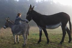 Rear view of girl touching mule while sitting on donkey at field Stock Photos