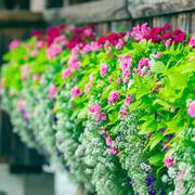 Stock Photo of Flowers on The Chapel Bridge in Lucerne