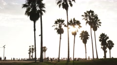 backlit palms venice beach - stock footage
