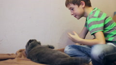 Boy  playing with a gray British cat Stock Footage