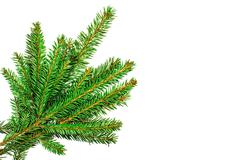 Christmas tree branches isolated on white background - stock photo