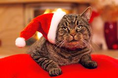 Gray Cat with Santa hat and a fireplace. Stock Photos
