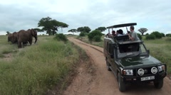 Group of elephants and tourists. Jeep safari in Tanzania Stock Footage
