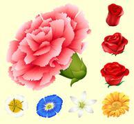 Various kind of flowers Stock Illustration