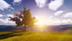Tree Sunrise among Mountains Stock Footage
