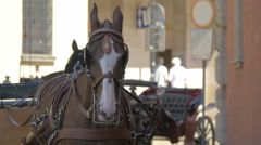 Brown horse hitched to a carriage on a street of Warsaw Stock Footage
