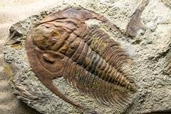 Jurassic Fossilized - stock photo