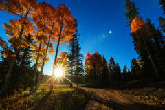Forest in the fall season with yellow leaves Stock Photos