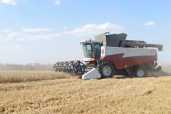 Combine harvesting wheat. Stock Photos