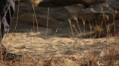 A man is walking on the sand Stock Footage