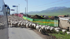 People are herding sheep near Xining, Qinghai Province,China Stock Footage