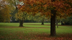 Autumn in the rural park, Salisbury, England, Europe Stock Footage
